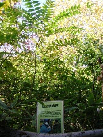 北大植物園3.JPG